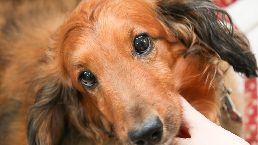チャリティムービー『イチからゼロに』~新たな犬生を歩み始めた保護犬たちの「命」の記録